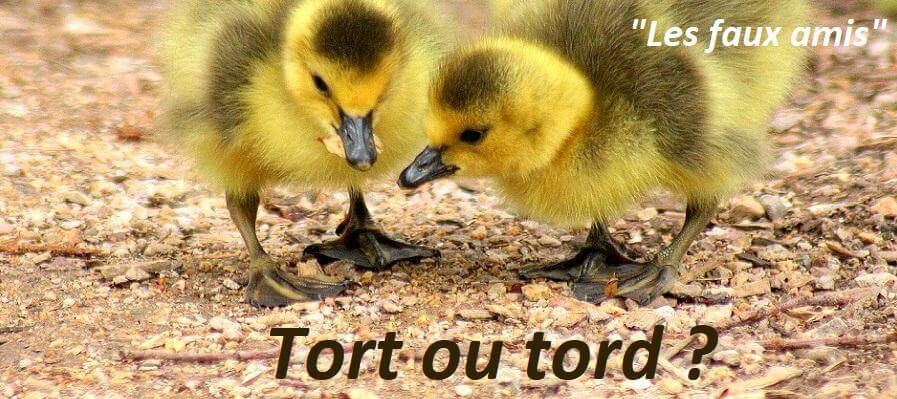 orthographe des faux amis tort ou tord